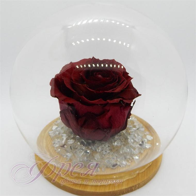 Вечна роза -   цвят бордо IV